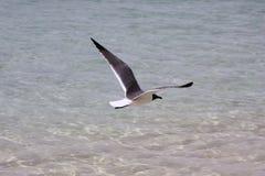 Seagull unosić się Zdjęcie Royalty Free