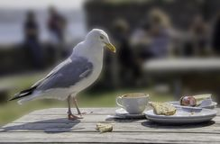 Seagull - the unseen reality