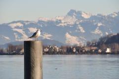 Seagull uppe på konkret förtöja Fotografering för Bildbyråer