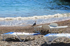 Seagull. Vacation. Summer tourism. Concept for rest. Close view Royalty Free Stock Photography