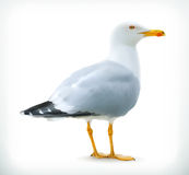 Seagull, vector icon. Isolated on white background Royalty Free Stock Photos