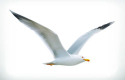 Seagull vector icon Royalty Free Stock Photos