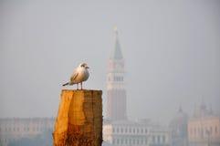 Seagull in Venice. Basilica San Marco with Seagull in Venice Stock Photo