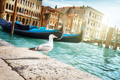 Seagull in Venice, Italy Stock Photography