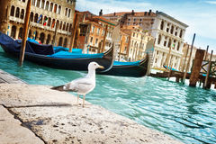 Seagull in Venice, Italy Royalty Free Stock Images