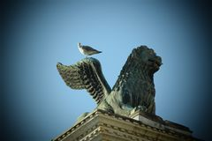 SEAGULL IN VENICE LOOK LAGOON royalty free stock photography