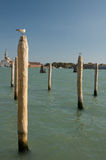Seagull in Venice Stock Photo
