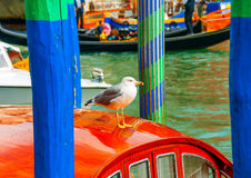 Seagull at Venice Royalty Free Stock Photo