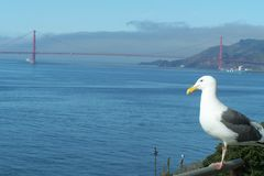 Seagull with a view Royalty Free Stock Image