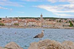 Seagull view Stock Photo