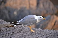 Seagull view royalty free stock photography