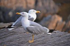Seagull view stock photos