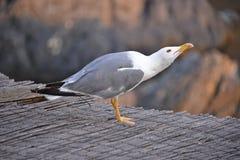 Seagull view royalty free stock photos