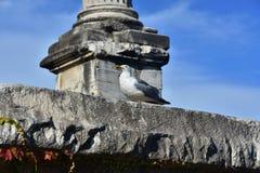 Seagull wśród antycznych ruin zdjęcia royalty free