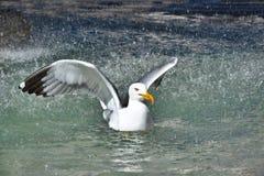 Seagull w fontannie w Rzym obraz royalty free