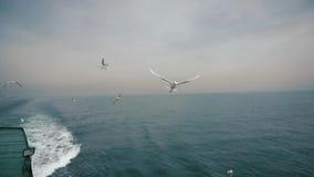 Seagull w locie łapie kawałek rzucającego turystą od statku chleb zbiory