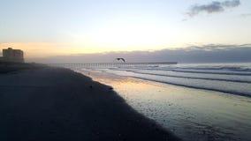 Seagull w locie przy Czereśniowym gajem Obraz Stock