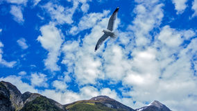 Seagull w niebie Zdjęcia Royalty Free