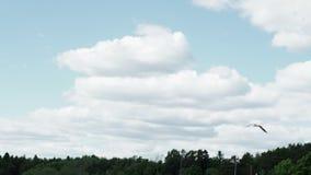Seagull w niebie zbiory wideo