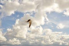 Seagull w niebie lato czas blisko morza Fotografia Royalty Free