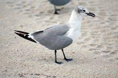 Seagull w piasku na Danie plaży obraz stock