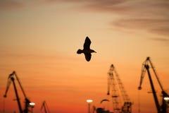 Seagull w porcie fotografia stock