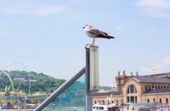 Seagull w porcie Barcelona przed antyczni zwyczaje zdjęcia royalty free