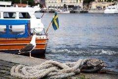 Seagull w Sztokholm Zdjęcia Royalty Free