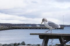 Seagull and harbor Stock Photos
