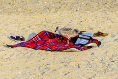 Seagull walking on a red beach blanket Royalty Free Stock Image