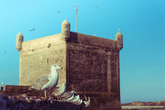The seagull on the wall at Skala du Port Stock Photo