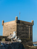 The seagull on the wall at Skala du Port Royalty Free Stock Photos