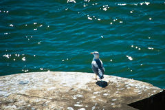 Seagull watch Royalty Free Stock Photo