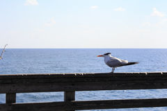 Seagull Watching Fishing Pole Stock Photography