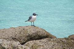 Seagull. Watching over his territory Royalty Free Stock Images