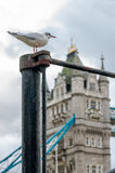 Seagull watching Tower Bridge Royalty Free Stock Photos