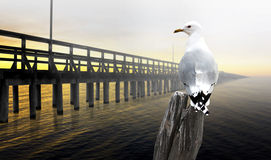 Seagull with pier at sunset Royalty Free Stock Photos