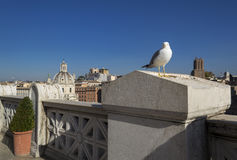 A seagull is watching you!. A seagull is watching you from the top Royalty Free Stock Images