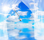 Seagull water and sun through curtain Stock Image
