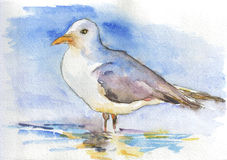 Seagull. Watercolor and ink hand drawing of a seagull Royalty Free Stock Photography