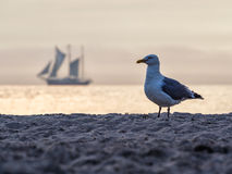 Seagull and Windjammer Stock Image