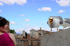 Seagull and Woman in Rome Royalty Free Stock Photo