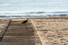 Seagull in wooden hall on the beach sand royalty free stock image