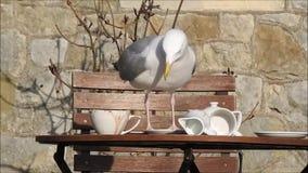 Seagull wygłupy pykniczni zbiory wideo