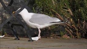 Seagull wygłupy pykniczni zbiory