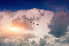 Seagull, wznosi się w niebie Zdjęcia Royalty Free