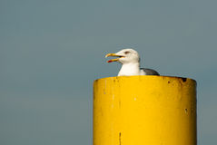 Seagull on yellow funnel Royalty Free Stock Photos