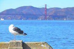 Seagull z Golden Gate Bridge i San Fransisco w tle Obrazy Stock