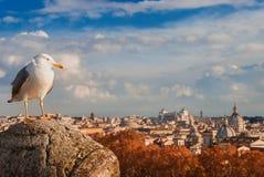 Seagull z Rzym jesieni zmierzchu panoramą zdjęcie stock