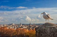 Seagull z Rzym zmierzchu panoramą zdjęcie stock